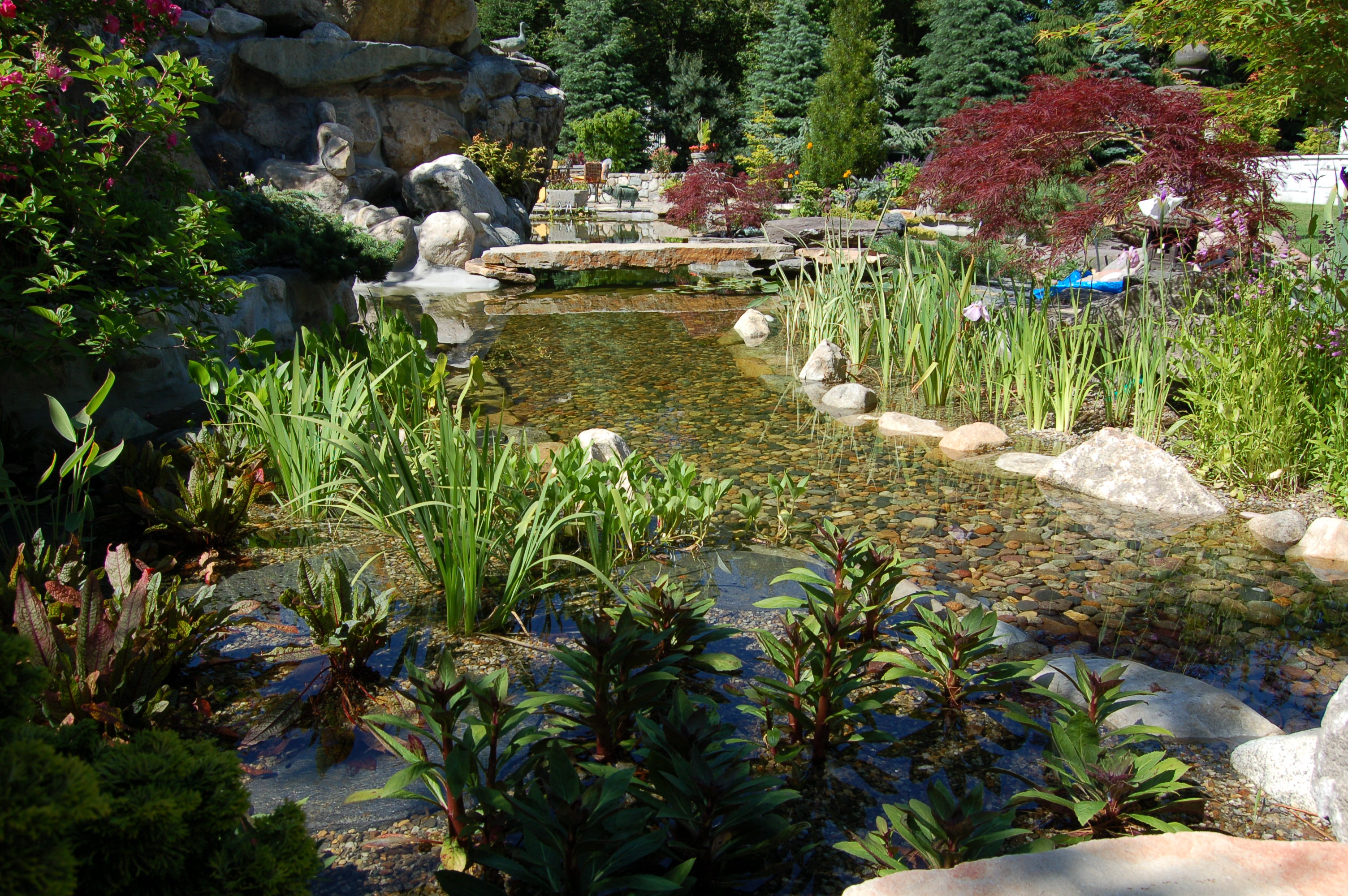Koi pond design stream with aquatic plants for Koi pool water gardens cleveleys